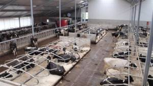 Cow Matting  (ask For The Test Report)