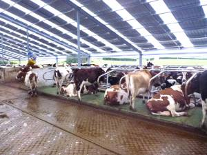 Stall Frames It Need To Work For The Cows And