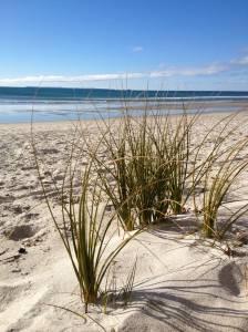 Sandbeds Are Best